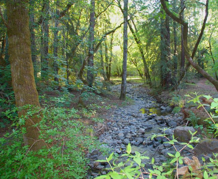 Bothe-Napa, Ritchey Creek
