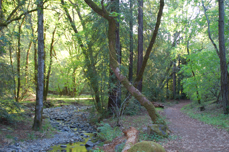 Bothe-Napa trail along Ritchey Creek