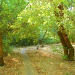 Bothe-Napa Trail