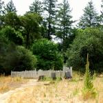 Historic Pioneer Cemetery