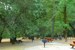 Day Use Picnic Benches