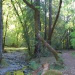 Ritchey Creek Trail